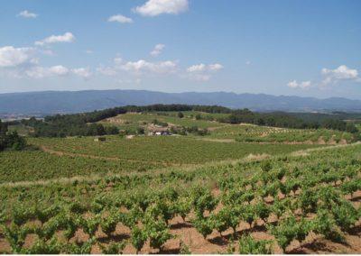La Carretera del vi